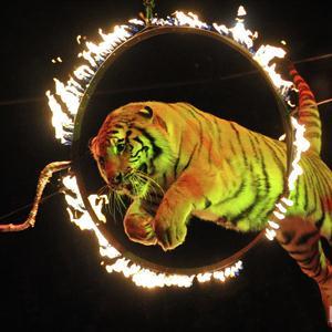 Цирки Кыштыма
